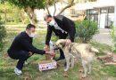Mhp Silifke İlçe Teşkilatı, sokak hayvanlarını unutmadı